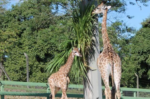 O que fazer no verão em Blumenau: Zoo Pomerode