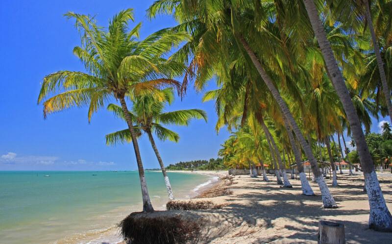 Coqueiros na praia de Paripueira em Maceió
