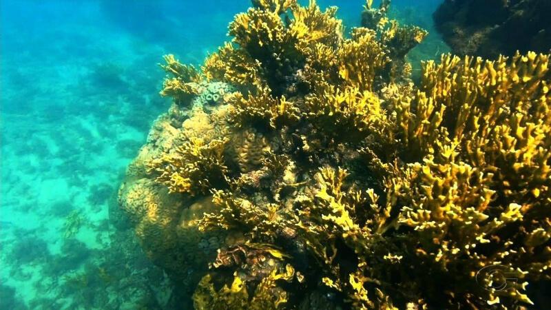 Corais no fundo do mar na Rota Ecológica da Costa dos Corais em Maceió