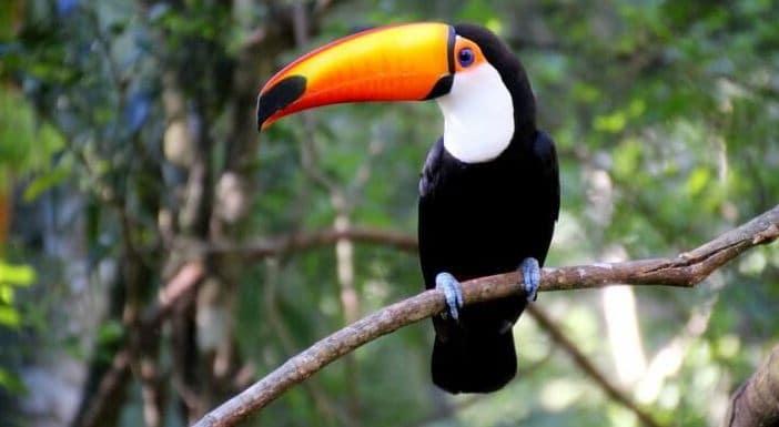 Zoológico GramadoZoo em Gramado